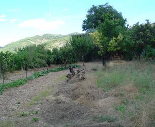 Casa tradicional con terreno en La Fueva