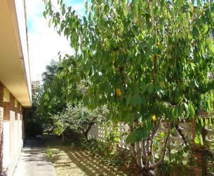 Piso con espléndida terraza y jardín en Aínsa