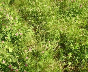 Fincas rústicas de 3,5 Ha en el valle del río Ara