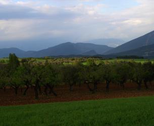 Finca rustica de 1,1 Ha. Buenas vistas al Pirineo